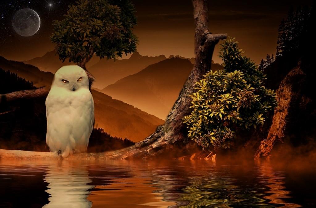 owl-846842_1280