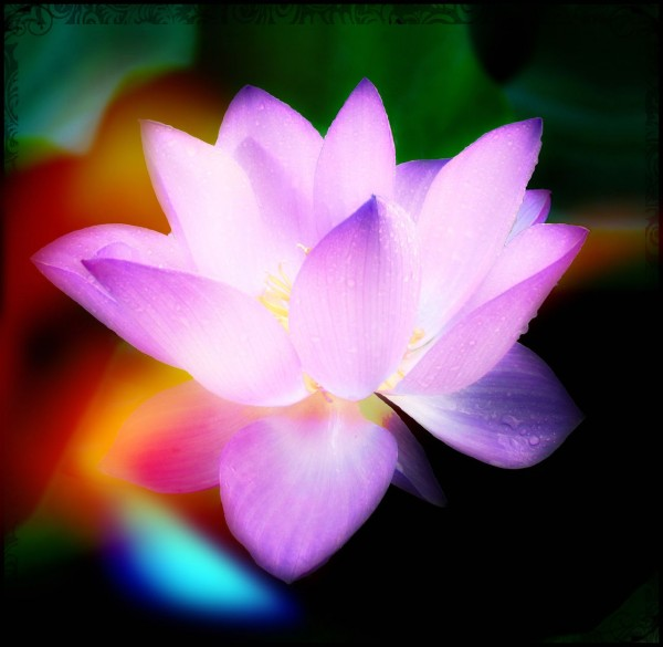 wispy ethereal lotus 8